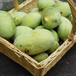 Connaissez vous le fruit Asimine ? Découvrez ce doux mélange de mangue et de banane